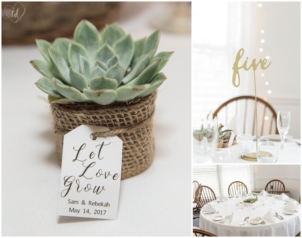 Succulent wedding favors and table centerpeices.
