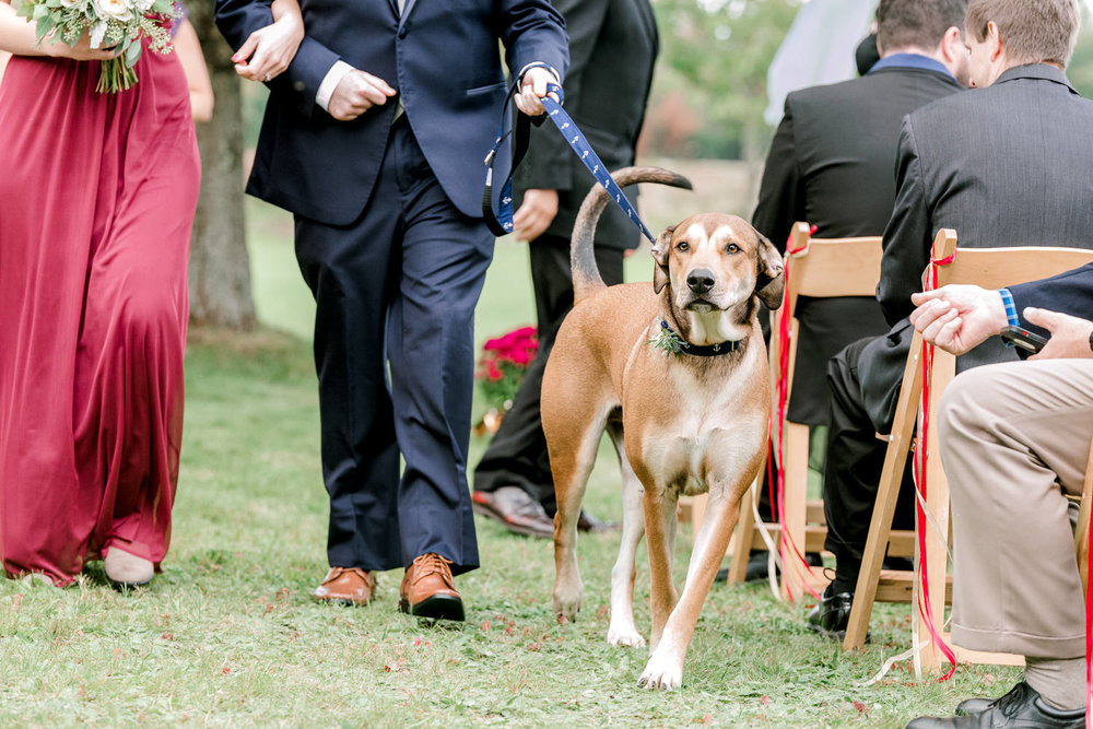 Dog Ring Bearer in Wedding Party