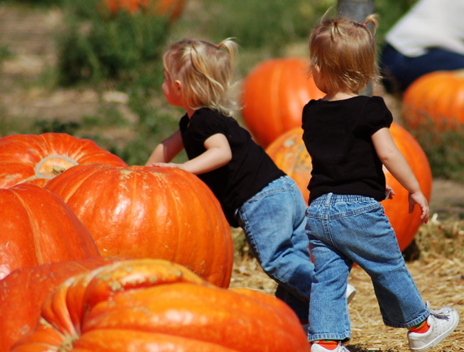 Welcome fall flavors with a Pumpkin Patch Party.