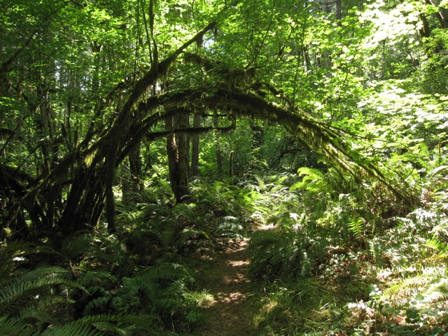 forest olympic peninsula