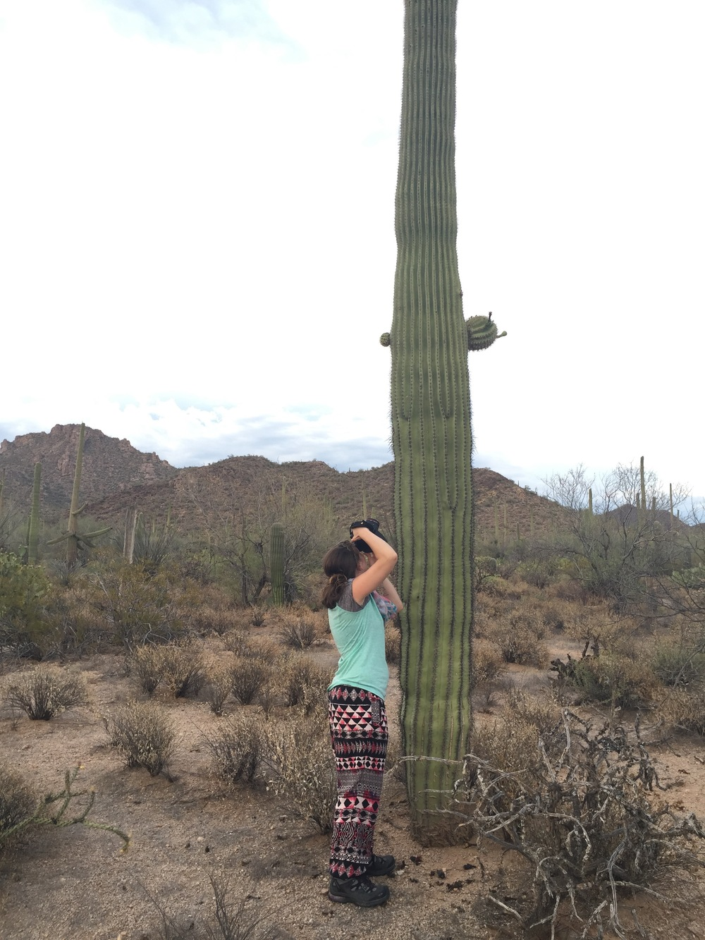 I remember Daniel making fun of me because I thought that these cactus grew like I had seen in cartoons and I was very surprised to learn that was not the case.