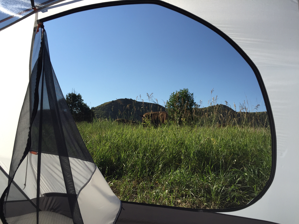 The morning we woke up and a bison was walking past our tent, two feet from my head.