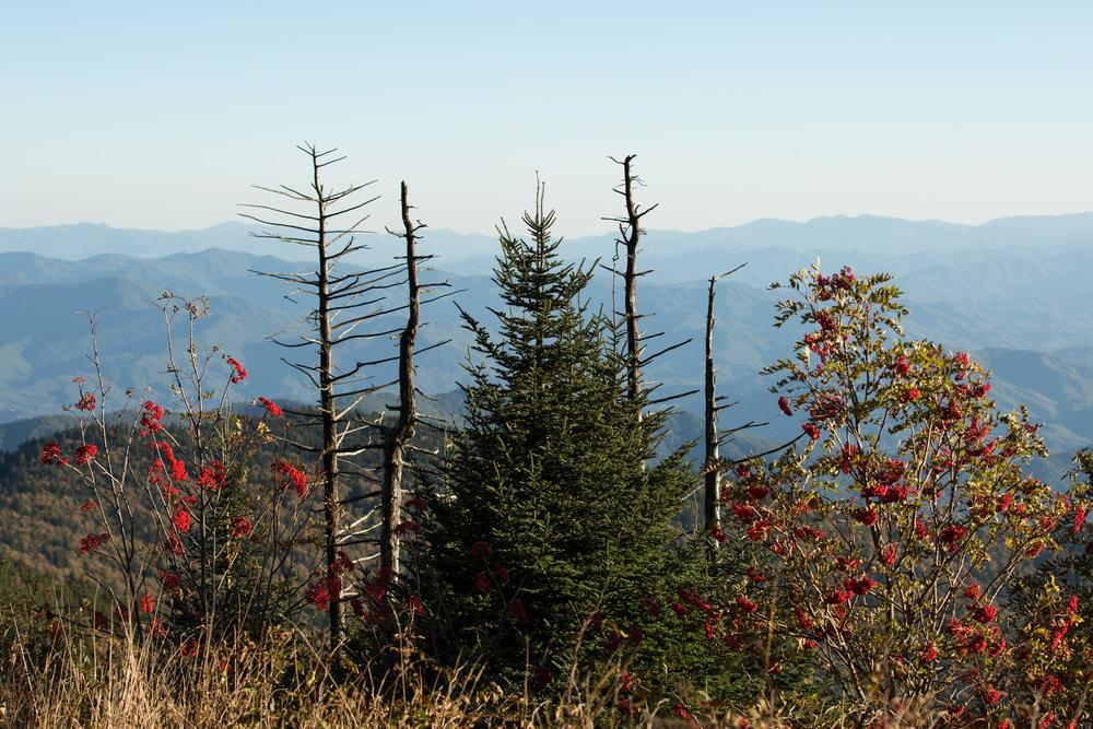 Smoky Mountains-5.jpg