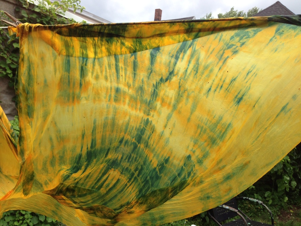 Coreopsis & Indigo backyard dyeing