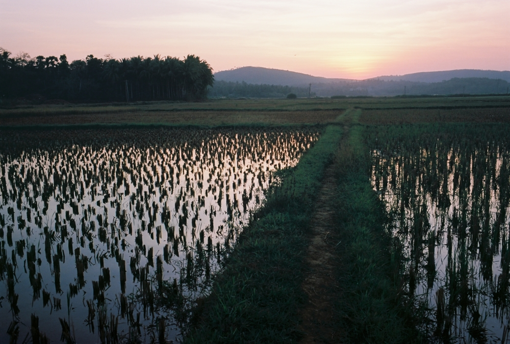 Karipal Mana sunset rice paddy 35mm