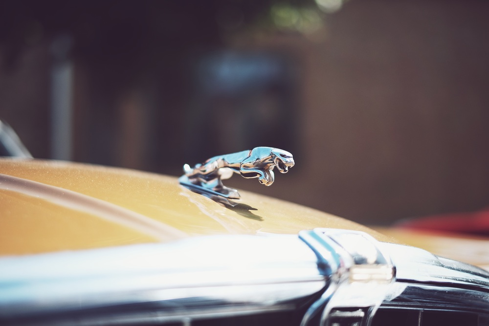 Jaguar  (Fuji X-T1/ 35mm 1.4R)