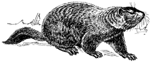 Ground_hog_(PSF) (2).png