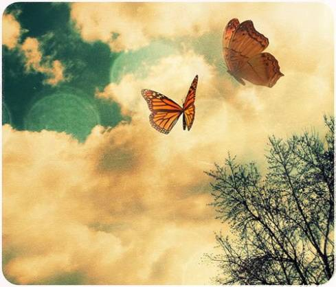 Just like the butterfly, I too will awaken in my own time.  ~Deborah Chaskin