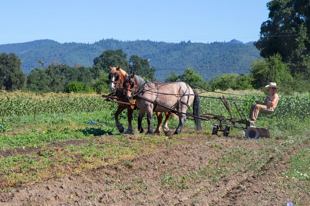 Dylan Jones is an intern at Live Power Farm who's been working with the farm's horses. One of the tricky maneuvers is turning at the end of a row without harming the already planted rows.