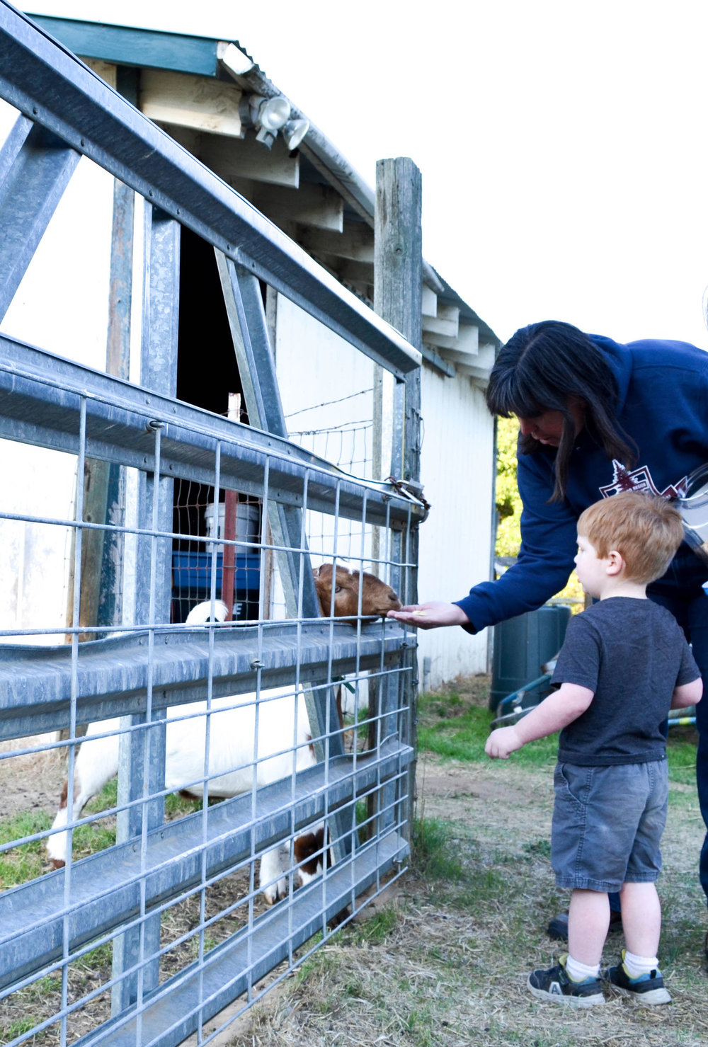 Beth helps a young guest feed a goat.