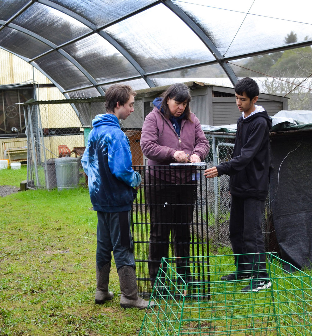 Beth helps students Quinn (left) and Sergio (right) assemble an enclosure so the rabbits can exercise.