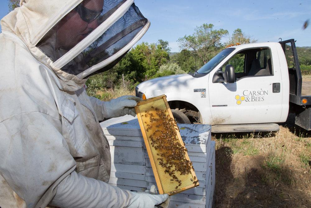 Carson & Bees examines a hive