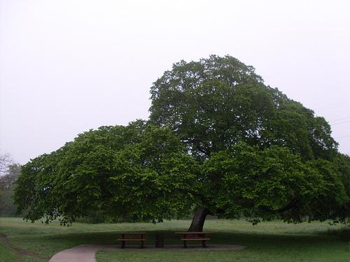 Garland Tree.jpg