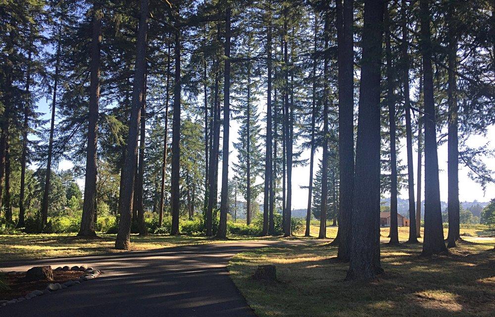 Lush_Trees