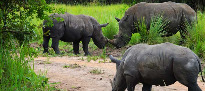 5-days-murchison-falls-and-queen-elizabeth-national-park-safari-rhino-tracking-ziwa-rhino-sanctuary.jpg