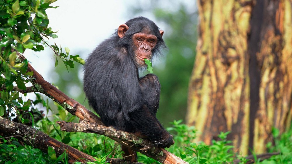 10-DAYS-UGANDA-PRIMATES-WILDLIFE-SAFAR.jpg