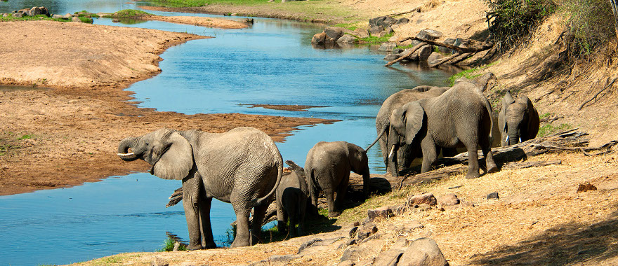 ruaha-national-park-elephants-driniking-water-safaris-viber-tours.jpg