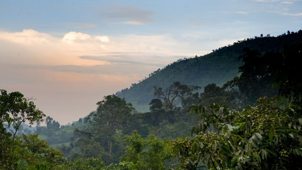 In-search-of-Bwindi's-birds-and-waterfalls-1240x698.jpg