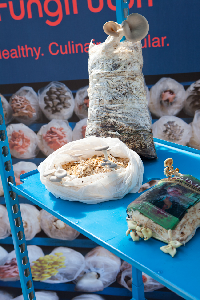 Fungi Futuri is een Bio Lab en stedelijke paddestolen boerdeij. een project van Doreen Westphal