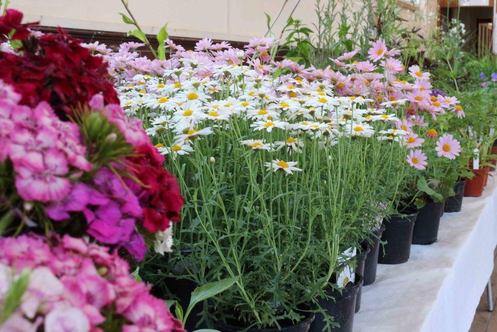 Sale Plants 2816.jpg