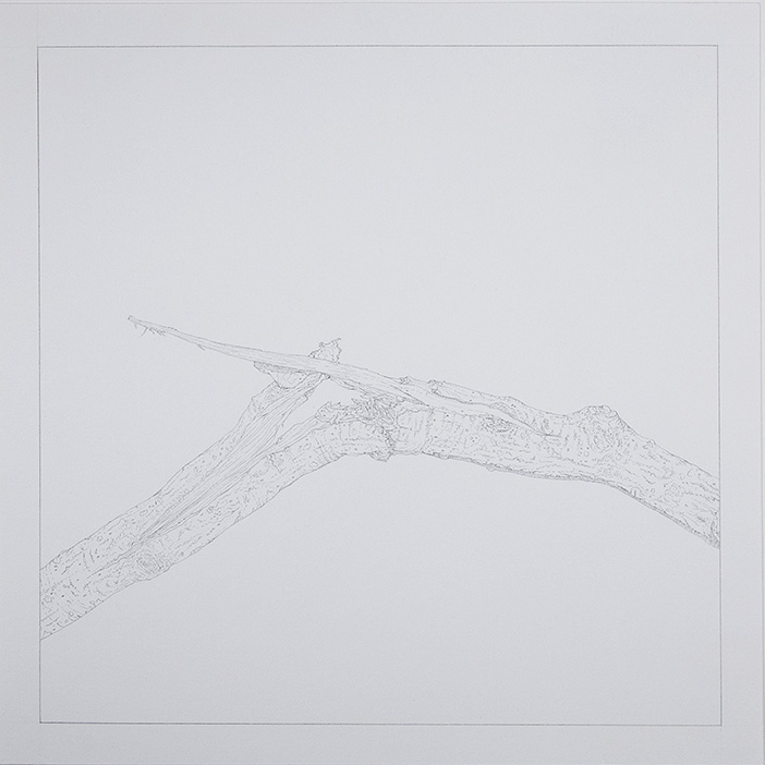 Splinter  , 2015 [private collection NY, NY]   Graphite on Paper   9 x 9 in.