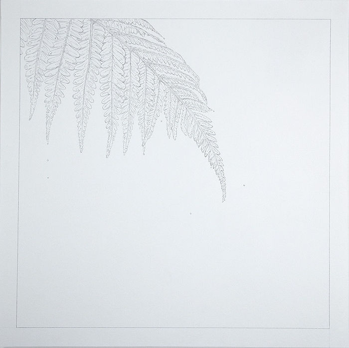 Fern  , 2015   Graphite on Paper   9 x 9 in.