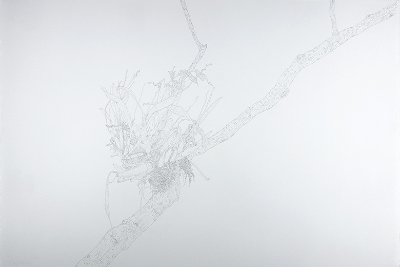 Epiphyte , 2015   Graphite on Paper   15 x 22 1/4 in.
