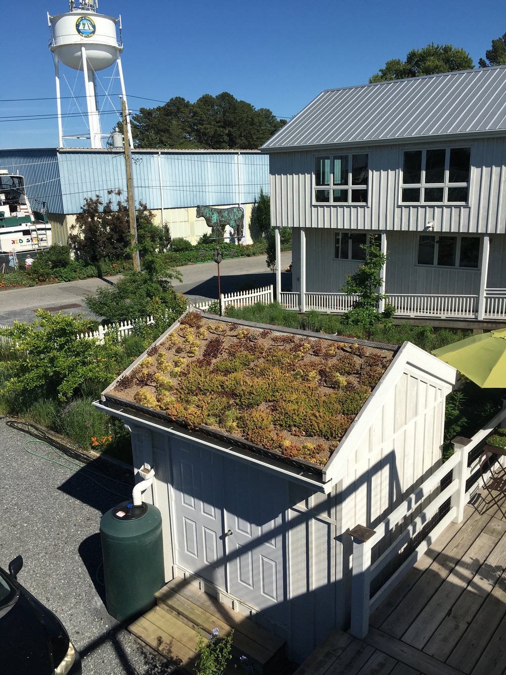 Innovative experiment for a green roof on a garden shed