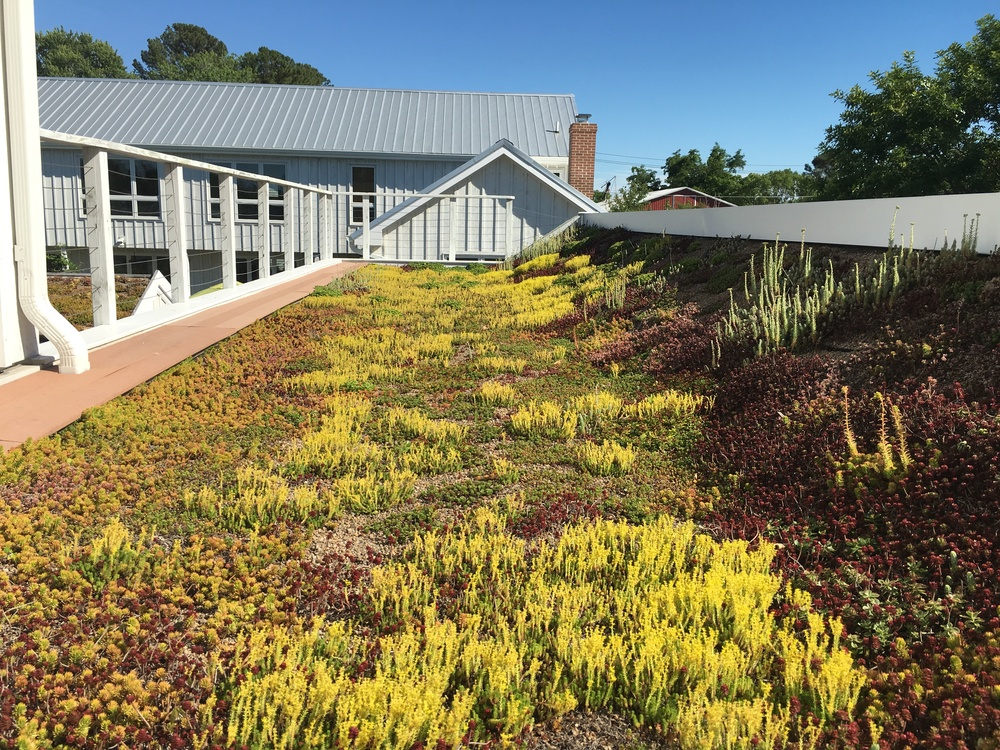 Standard Green Roof at Mill Street. This roof is apart of a system that effectively harvests over 5,000 gallons of water!