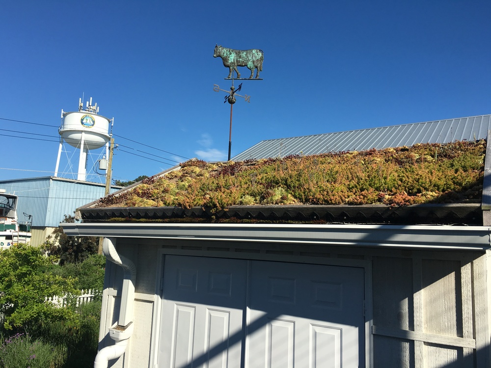Check out how this modest roof harvests 150 gallons of rainwater!