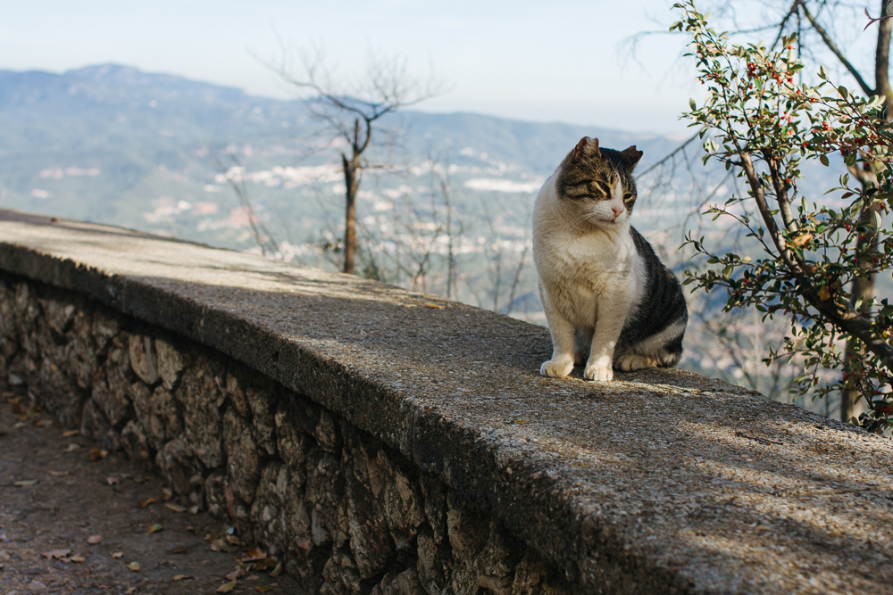 Mountain gato. Was really happy to see a kitty (it's been so long)