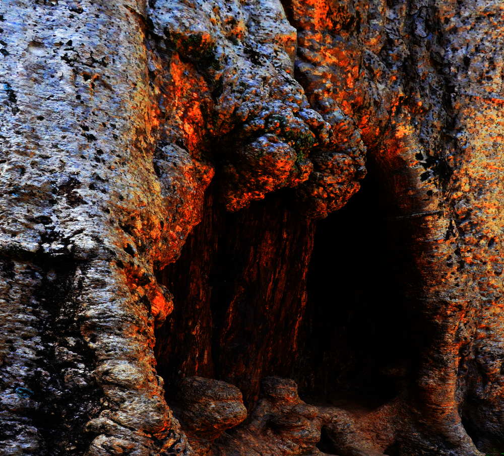 Cave of the tree