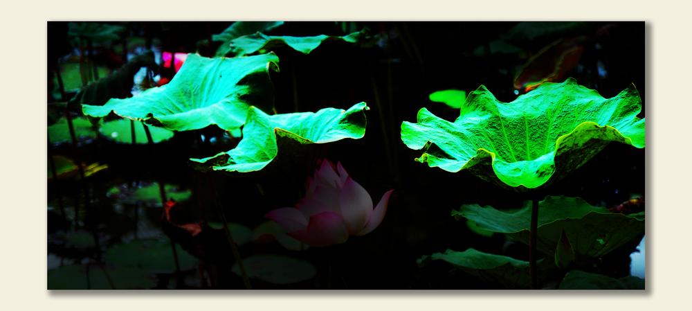 Leaf than Flower