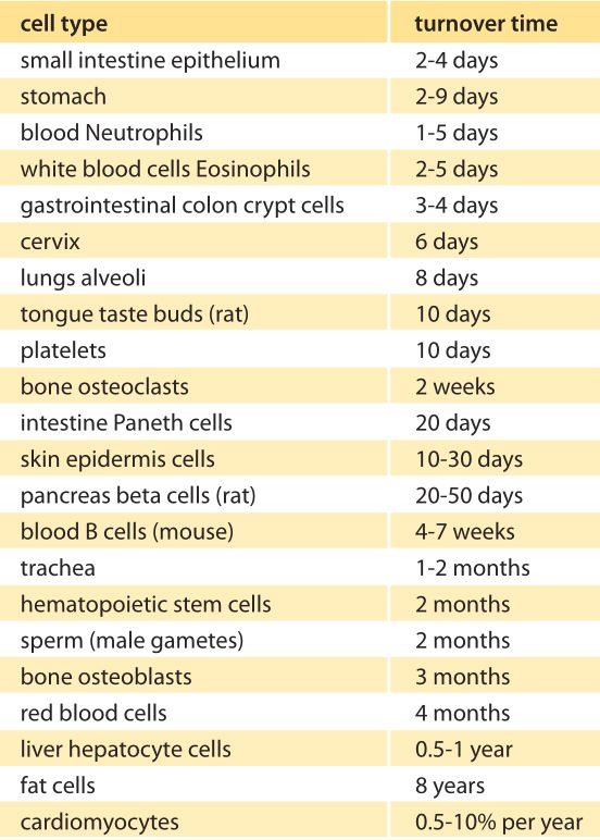 Human Tissue Regeneration times,;source