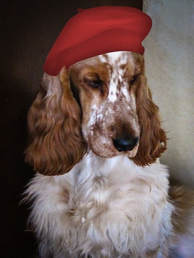 Even our cocker spaniel is preparing for Valentine's Day with a new chapeau!