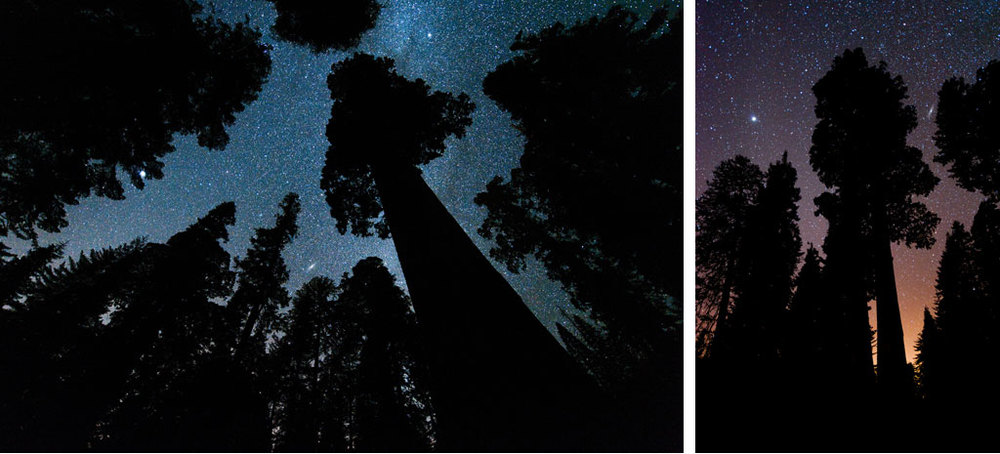 Andromeda and Sequoia