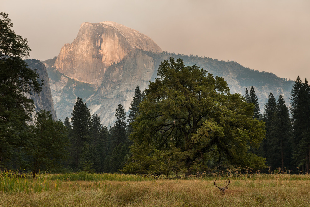 Elk, Live Oak, and Half Dome in the pall of the Rim Fire smoke, August 2013, Yosemite Valley