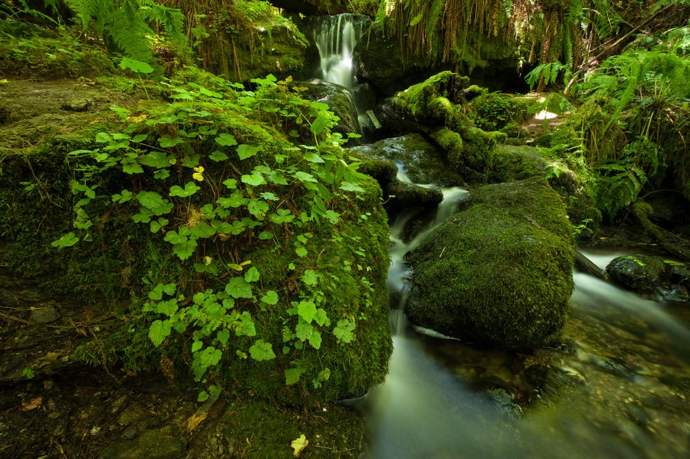 Trillium Falls, Prairie Creek Redwood State Park