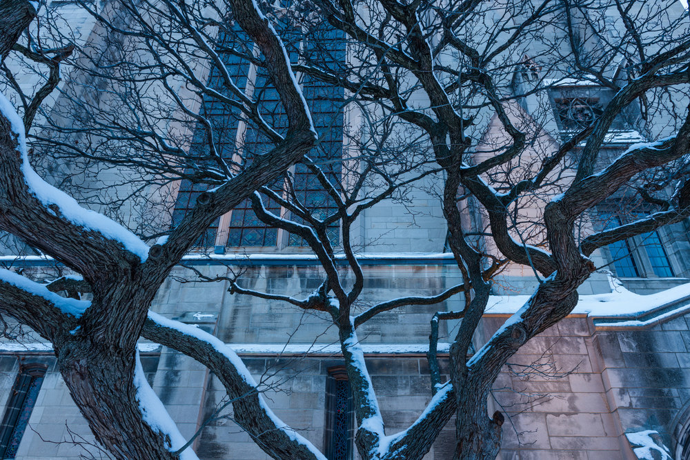 Tendrils and snow upon the backdrop of Rockefeller Chapel.