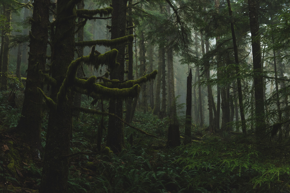 Coastal rain forest, Ecola State Park, Oregon - November, 2015