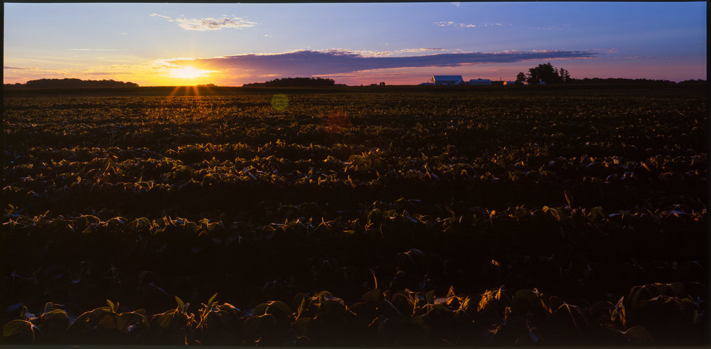 Sunrise over the soy - Indiana Farmhouse, July 2015.  Shot on Fuji Velvia 6x12cm