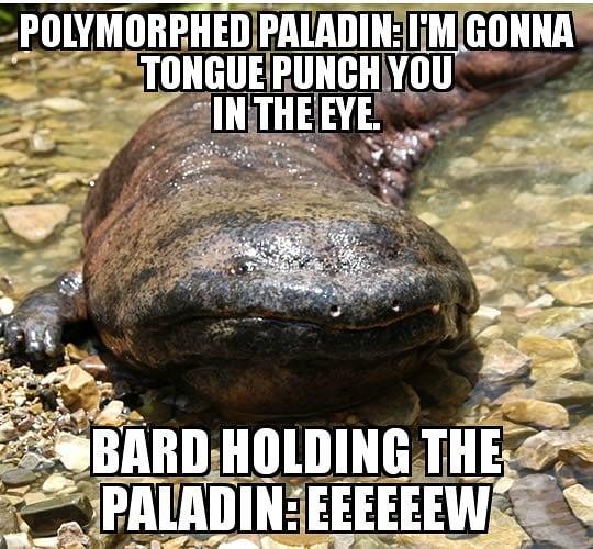 Polymorph is a weird spell. #shitdndplayerssay #dnd5e