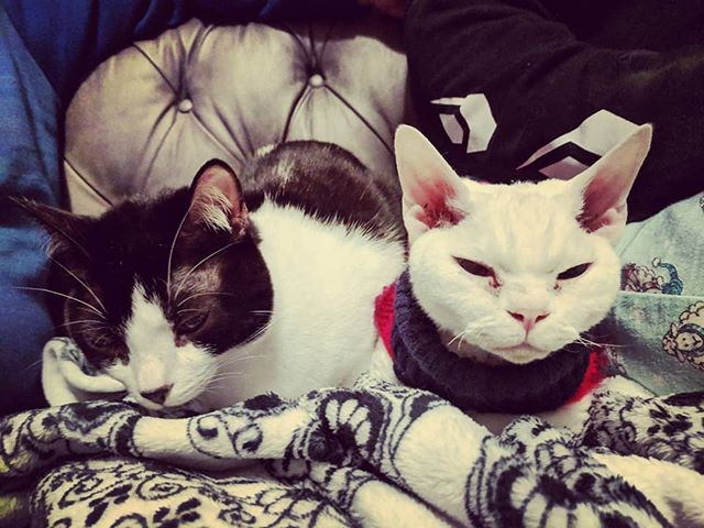#catsofinstagram