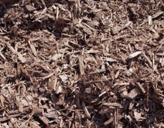 pine-bark.jpg