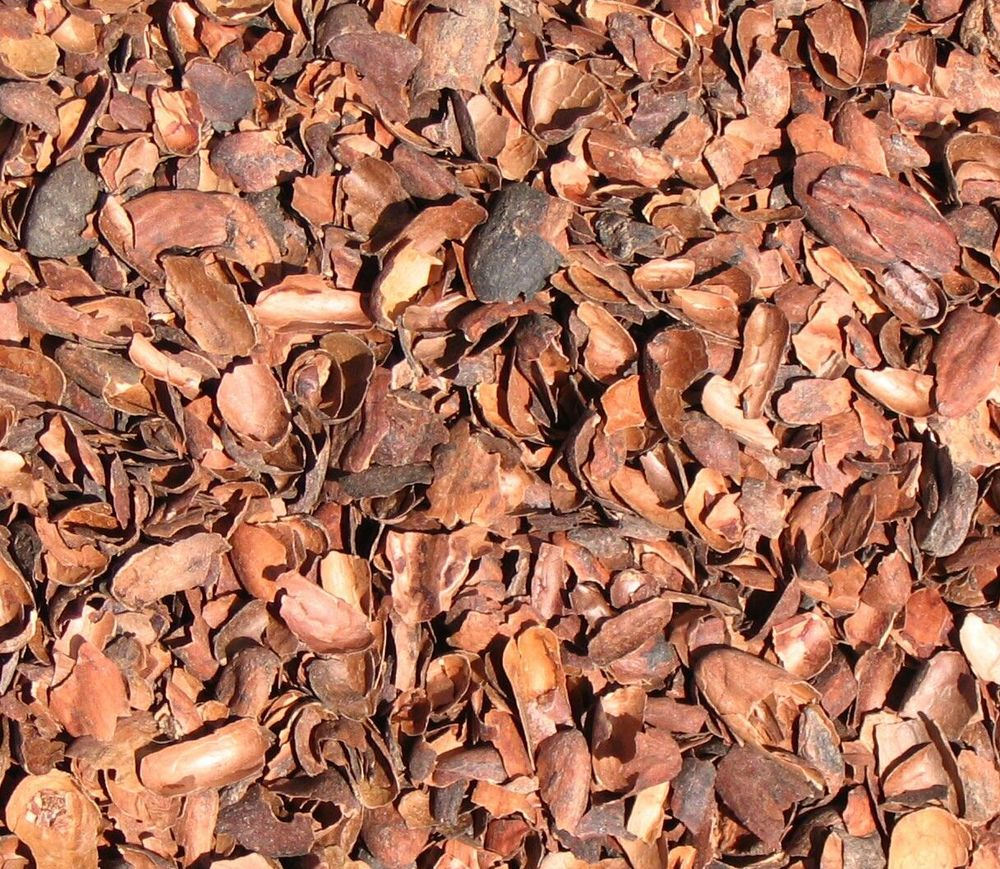 Cocoa Shells on made of chocolate cacao