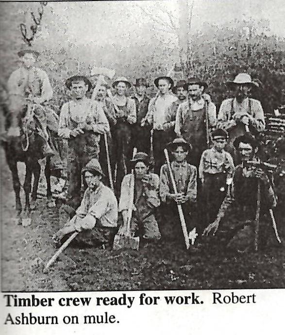 TImber Crew.jpg