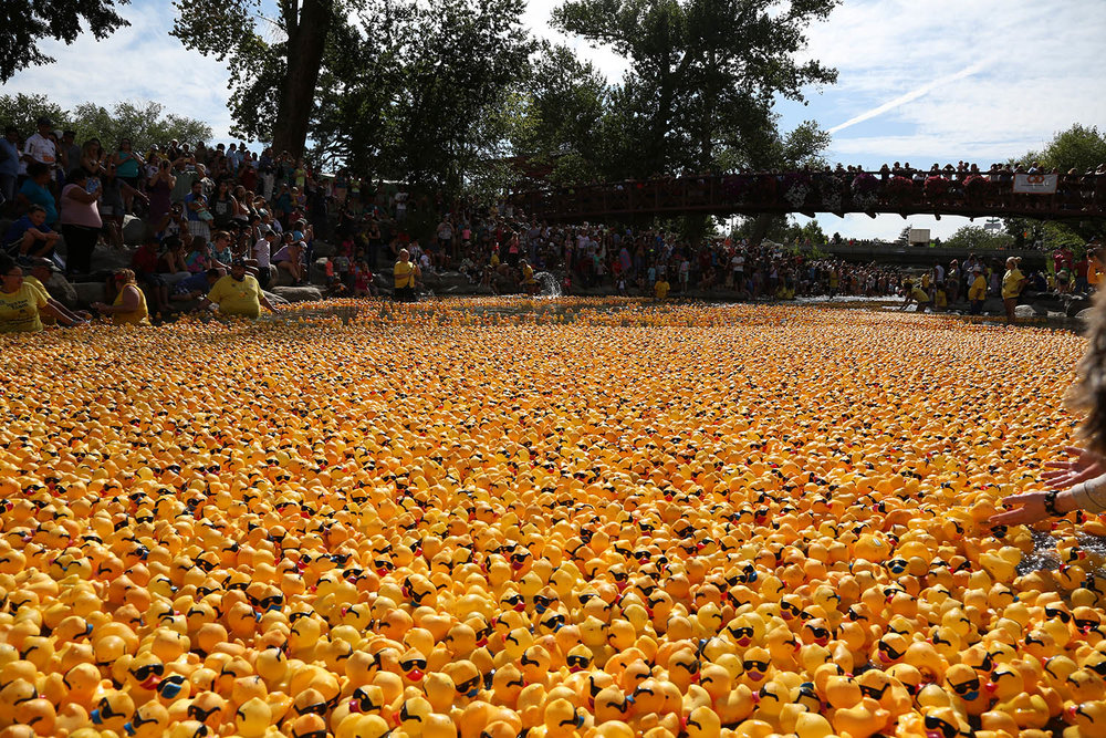 Nevada Humane Society Duck Race