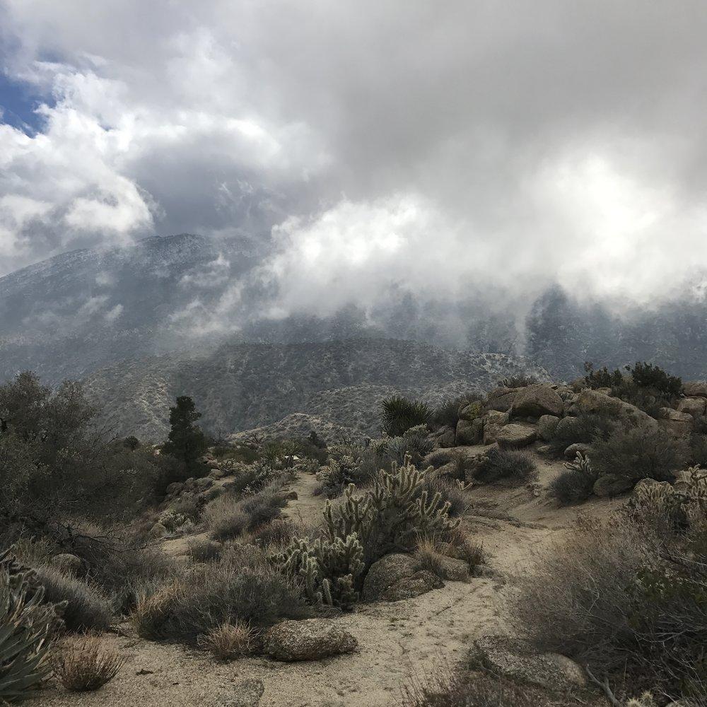 Piñon Magic in the Clouds
