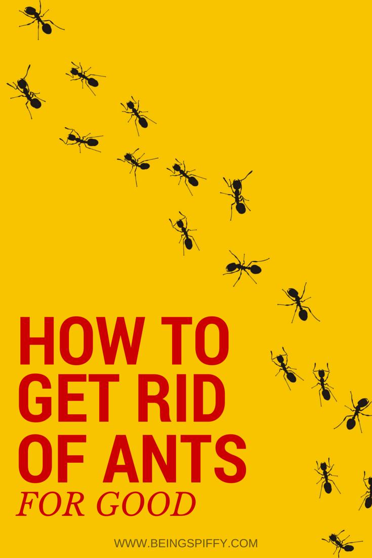 get_rid_ants.jpg
