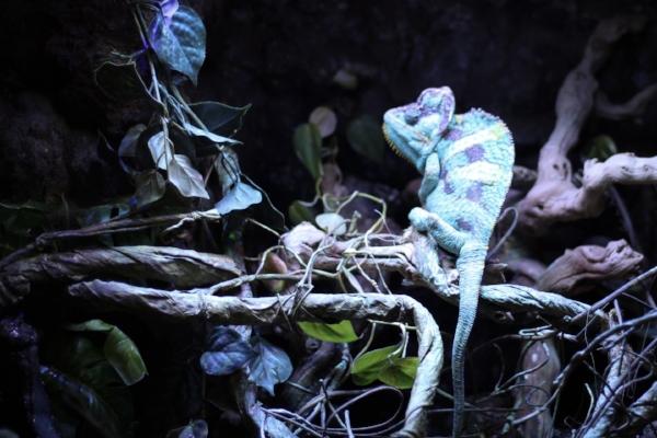 seaquest_chameleon_pascal.JPG